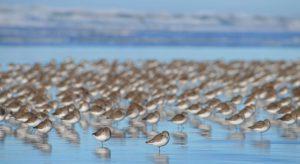Washington Coastal Bird and Wildlife and Photography